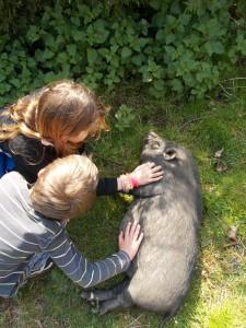 Cochon (1)